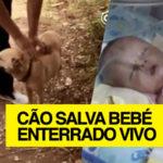Cão salva bebé recém-nascido que tinha sido enterrado vivo