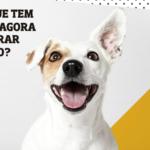Boas notícias: A partir de 13 de Maio é permitida entrada de cães no C.C. Alegro Alfragide