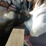 Leão marinho arrasta criança para água com uma violência extrema (vídeo)